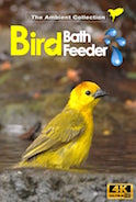 4_K_tropical_bird_feeder_and_bird_bath
