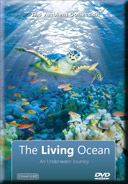 Relaxation with Oceans and Marine Sea Life in Tropical Seas