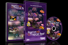 Tropical Fishes and Marine Sea Life and Coral Reefs filmed in 4K
