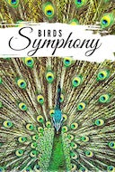 birds_symphony_birds_see_birds_in_slow_motion_from_all_over_the_world