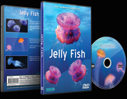 Sea Jellies and Jelly Fish In Tropical Seas and Aquariums