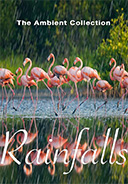 rainfalls_with_tropoical_birds_nature_scenery_flamingos_waterfalls_raindrops