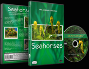 Seahorse Aquariums and Tropical Fishes
