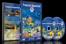 Tropical Aquarium XXL