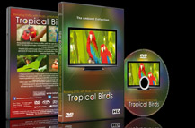 Tropical Birds with Music or Nature Sound