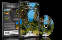 Scenic Walks in Tropical National parks and Rainforest for Indoor Fitness and Treadmill Exercises.