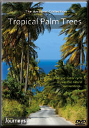 Fitness-Journeys-Tropical-Palm-Trees