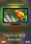 tropical_bird_feeder_relaxing_cute_colourful_birds_with_natural_bird_sounds_videos_for_your_pets