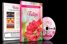 Flowers and Tulips DVD - Flowers of Holland in Spring Summer Gardens with Piano Music