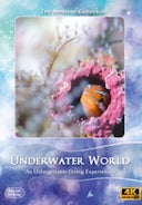4_K_unterwater_world